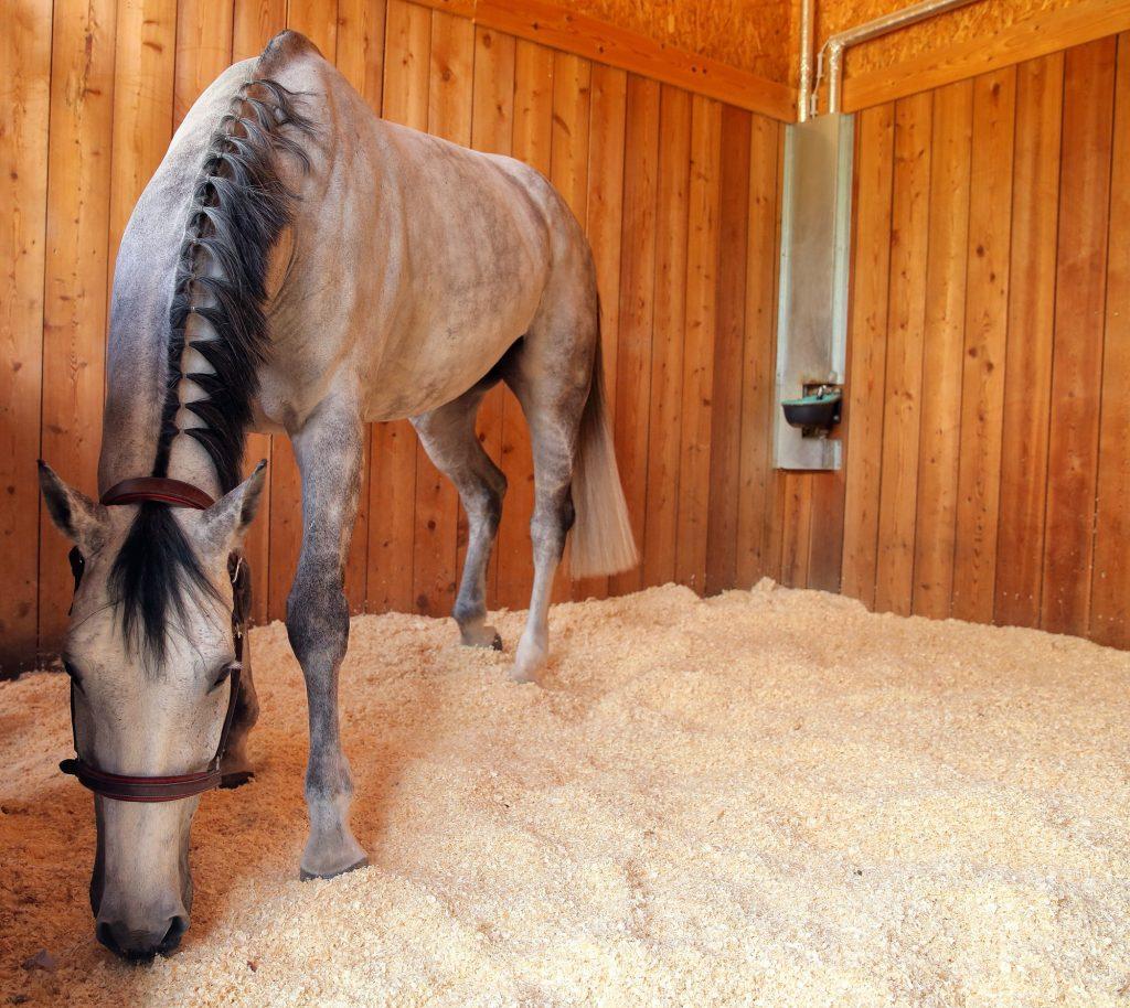 Pferde lieben Happy Horse