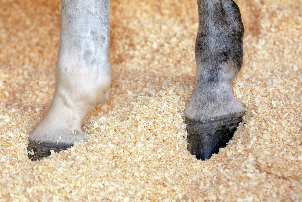Die Einstreu von Happy Horse schont die Hufe der Pferde.